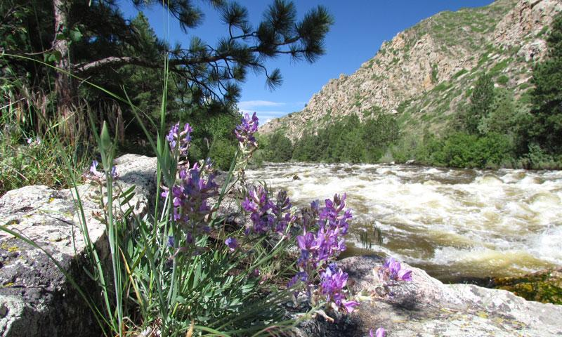 Rafting the Poudre River