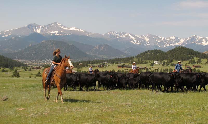 Horseback Riding and Cattle Drive at MacGregor Ranch