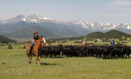 Horseback Riding and Cattle Drive at MacGregor Ranch