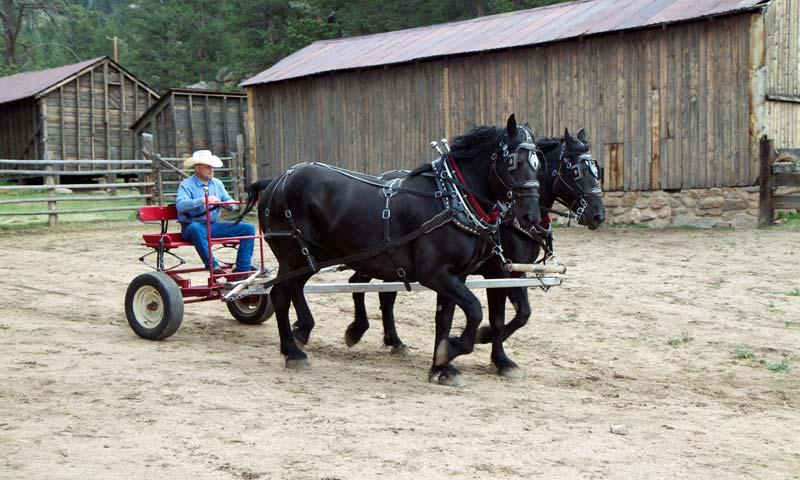 Working Horses at MacGregor Ranch