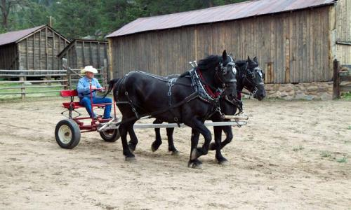 Working Horses at MacGregor Ranch